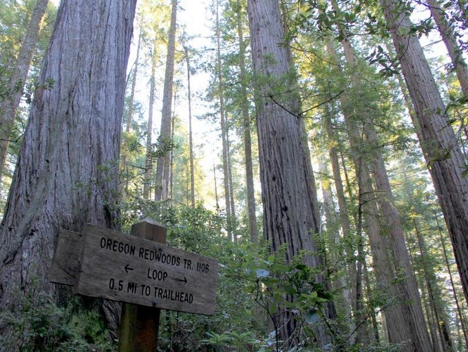 A sign points hikers on the correct route through the loop of the Oregon Redwoods Trail.