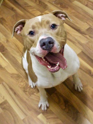 Marshall, a 3-year-old mixed breed dog, was brought in as a stray to the Marshfield Area Pet Shelter.