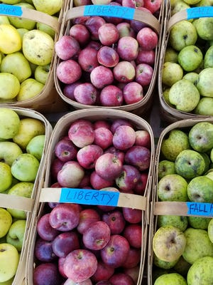 There are multiple farms with apples at area tailgate farmers markets.