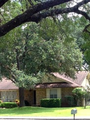 This live oak has raised the landscape a bit.
