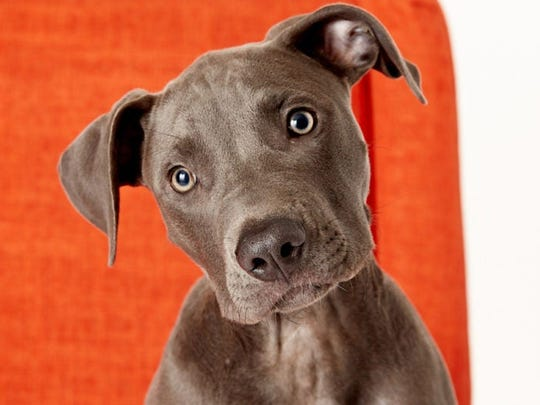 Tips for helping animal-wary acquaintances get comfortable around your pets