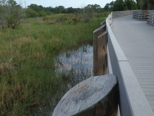 Linear Park Trail, next to the Brevard Zoo, is a boardwalk trail through wetlands and wooded areas that's easily accessible to everyone.