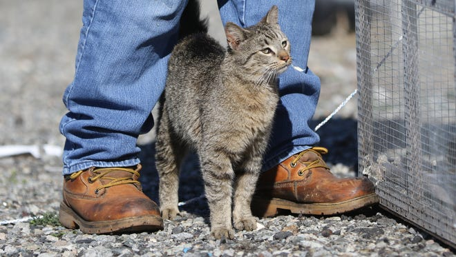 Bonnie Nilsen traps stray cats so they can be spayed or neutered and returned to their colonies.