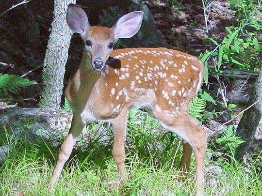 Chronic wasting disease has been reported in at least 24 states and two provinces in Canada, said the Centers for Disease Control and Prevention.