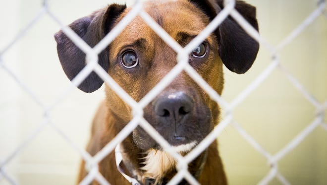 The Muncie Animal Care and Services facility has dozens of dogs and cats available for adoption.