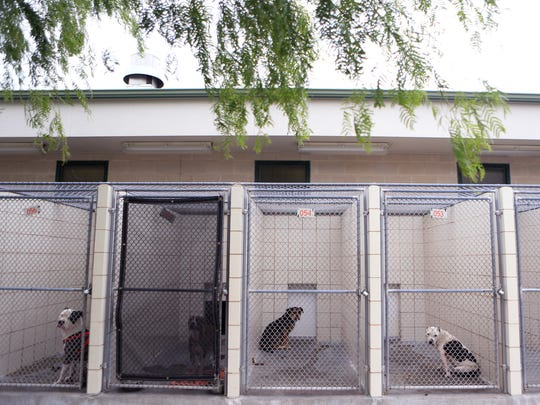 Dogs peer from behind cages at Animal Control. The numbers of dogs to be adopted, or taken by rescues, has gone up dramatically at the city shelter in the last few years.