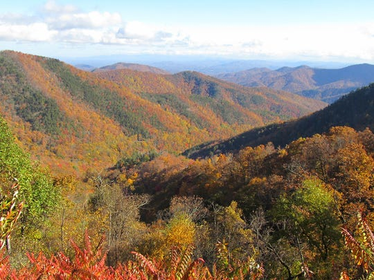 The Foothills Conservancy of North Carolina recently conserved the Buck Creek Tract near the Blue Ridge Parkway and Pisgah National Forest.