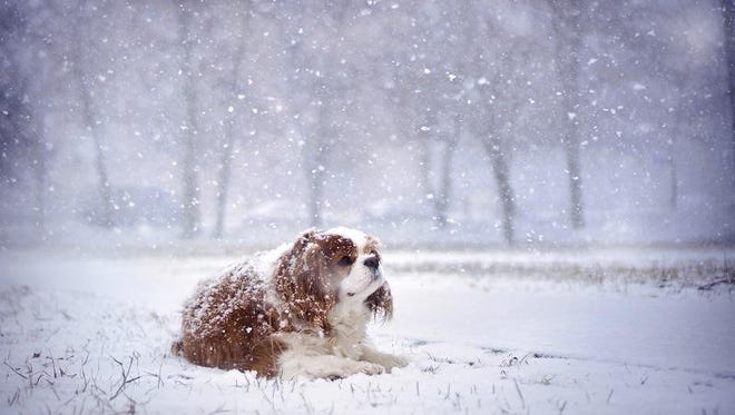 It only takes a little thought to keep your furry friends safe when the weather turns cold.