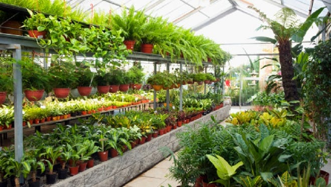 Potted plants in a greenhouse