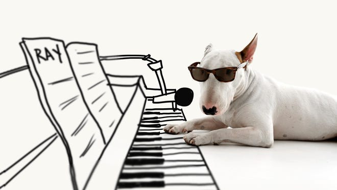 Artist Rafael Mantesso shows his bull terrier, Jimmy Choo, with a piano keyboard that Mantesso has drawn in on the floor around him at his studio in Belo Horizonte, Brazil. AP