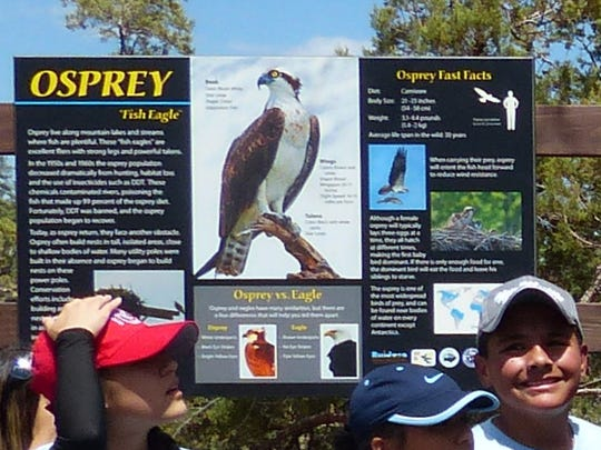 One of the two interpretive osprey sign shows their image and relays facts about the birds.