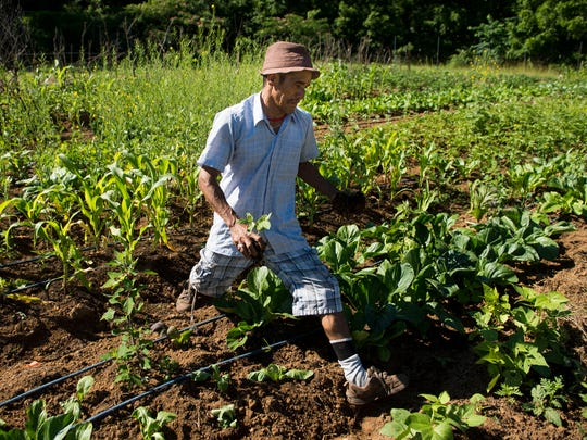 Tek Guragai, who is originally from Bhutan, tends to his crops at the Growing Together refugee agriculture farm.
