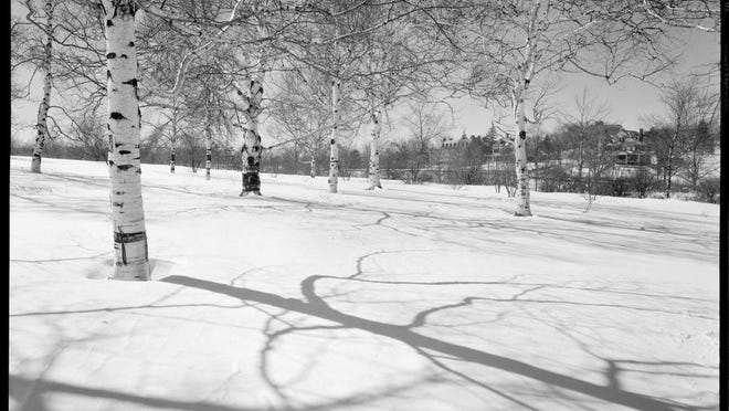 Here is the Arnold Arboretum with ash birches on top of a hill looking towards Faulkner Hospital in 1939. Learn more from Digital Commonwealth at www.digitalcommonwealth.org.