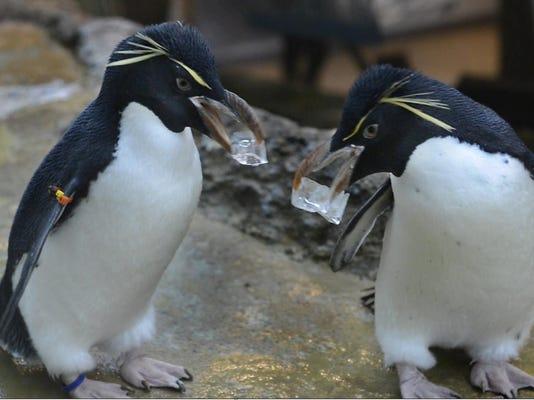 dt-penguins034T