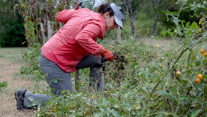 Kimberly Ferlauto cleans debris out of a field that she farms on Thursday.