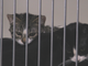 Two kittens cuddle at the Salinas Animal Shelter Saturday.