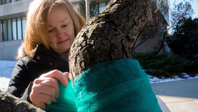 Valerie von Frank ties a teal ribbon representing Nassar abuse victims in March outside MSU's administration building.