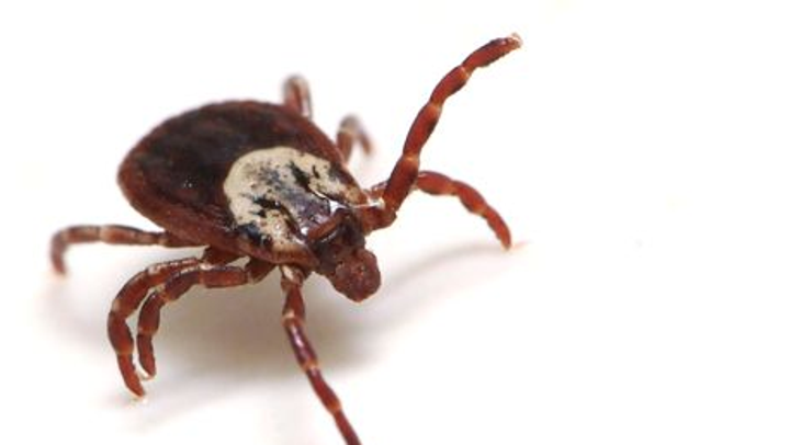 Lyme diseases cases spiked by 50 percent in Dutchess in 2017