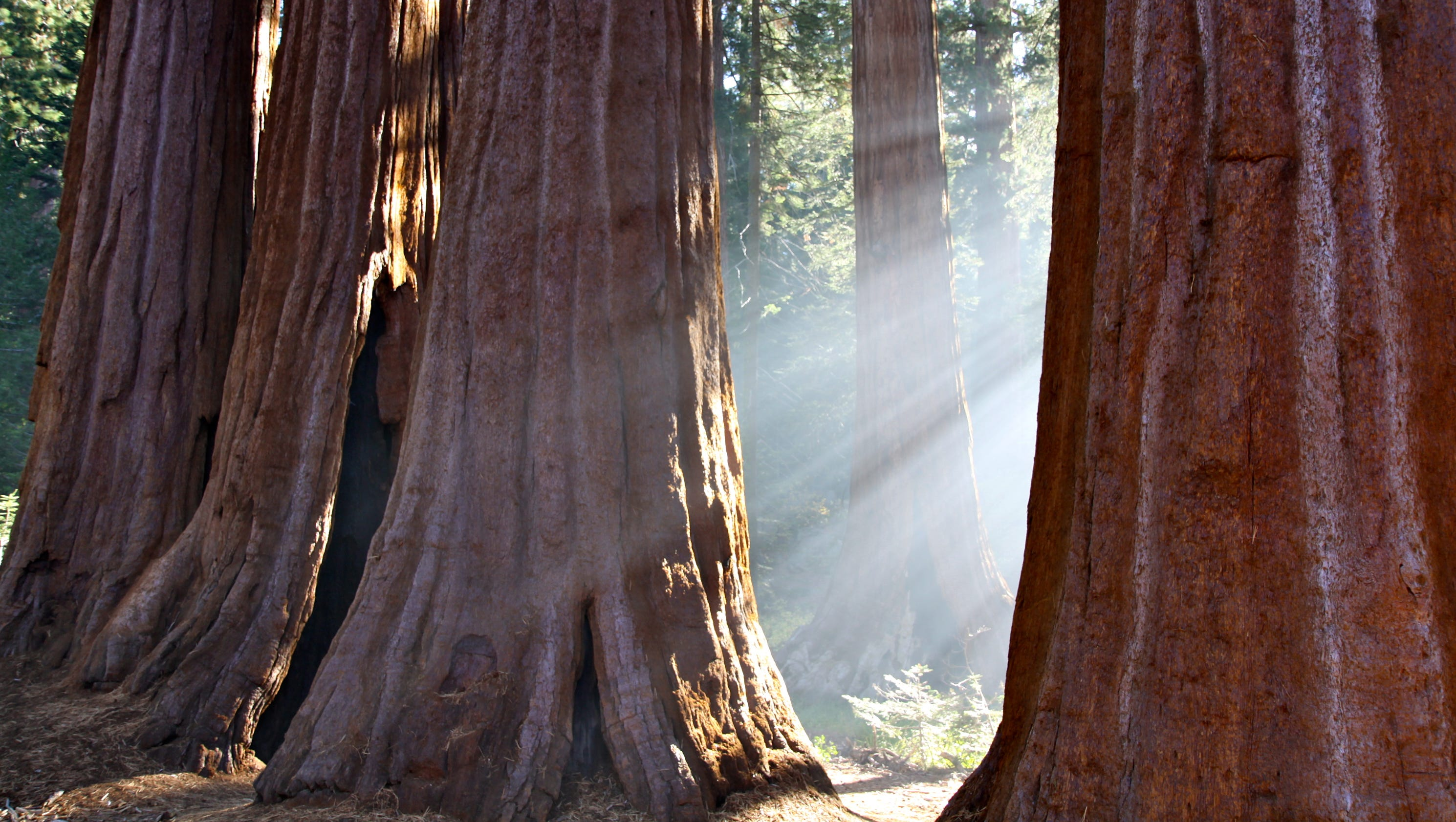 story news local visiting sequoia national park
