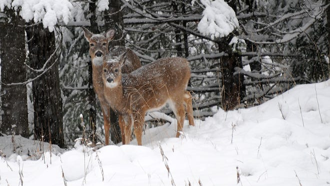 Fifteen years into its struggles with chronic wasting disease, the Department of Natural Resources still doesn't have an action plan for handling CWD discoveries outside the disease's endemic area in southern Wisconsin.