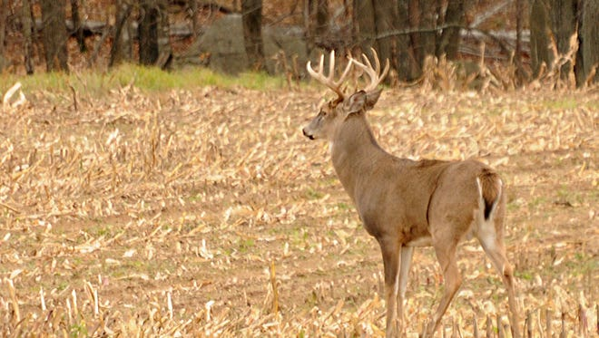 A deer-feeding ban has been in expanded in Minnesota in an effort to control chronic wasting disease.
