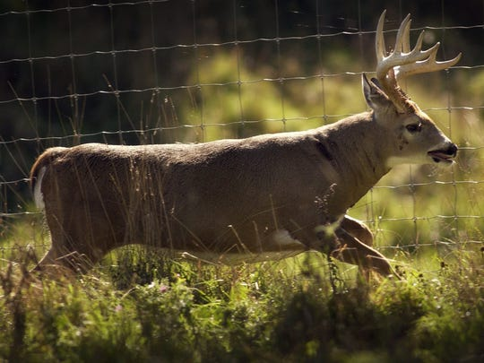 Nine people were killed in Wisconsin in deer-related crashes in 2017.