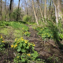 Fond du Lac County Audubon plan evening walk June 5 at Kay's Ledge