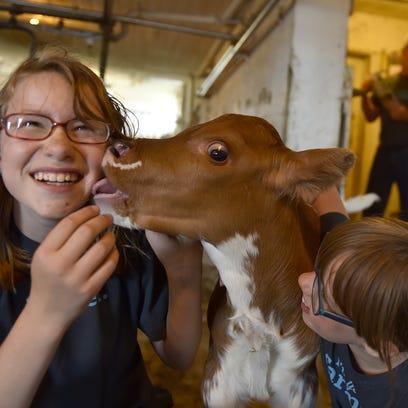 Wilke R Organic Farm hosts Door County Dairy Breakfast