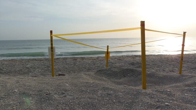 Fort Myers High's Adrian Dougherty took first place with her photo of a staked turtle nest.