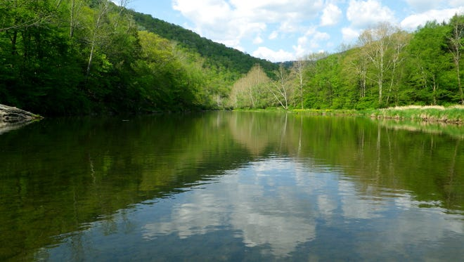Husky brown trout lurk in this deep, quiet pool in the East Branch in the Catskills.