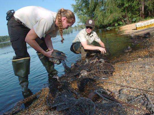 Wood ducks in net