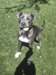 Charlee, the Doggo of the Week, is available for adoption