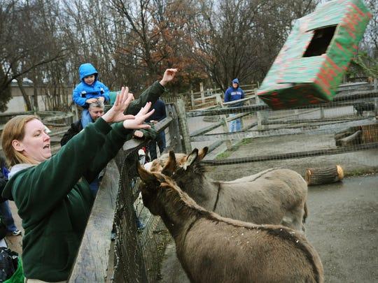 Zoo supervisor Irene Egan throws a box containing hay