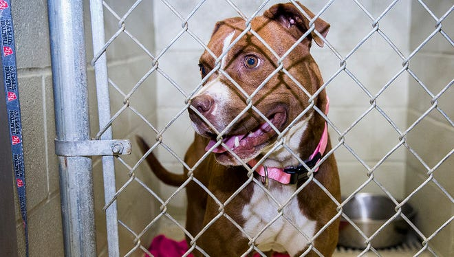 The average stay for a dog at the Muncie Animal Care and services facility is 16 days.