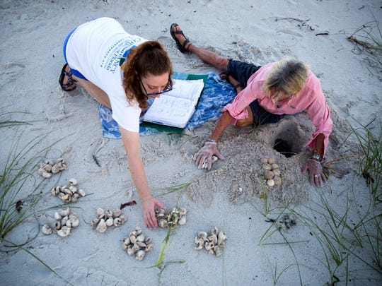 Maura Kraus and Maddy Kenton count the hatched eggs while excavating a nest on Saturday, July 15, 2017, along the beach in downtown Naples.