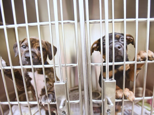 Puppies wait for an exam at the Michigan Humane Society