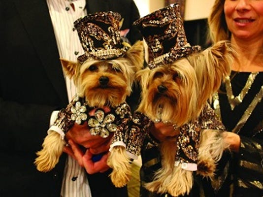 New York's Hotel Pennsylvania hosts a pet fashion show as part of the festivities surrounding the Westminster Kennel Club Dog Show.