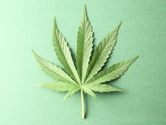 A marijuana leaf on a table.