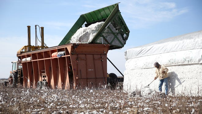 Local farmers help strip the cotton crop of Colin Klattenhoff Thursday, Jan. 5, 2017, near Miles.