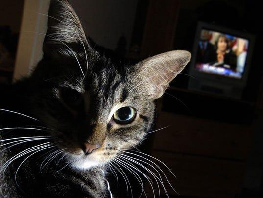 Katrina cat