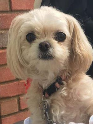 Molly was lost near Weems Road on Oct. 20.