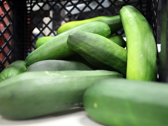 Don't let your zucchini grow giant sized.