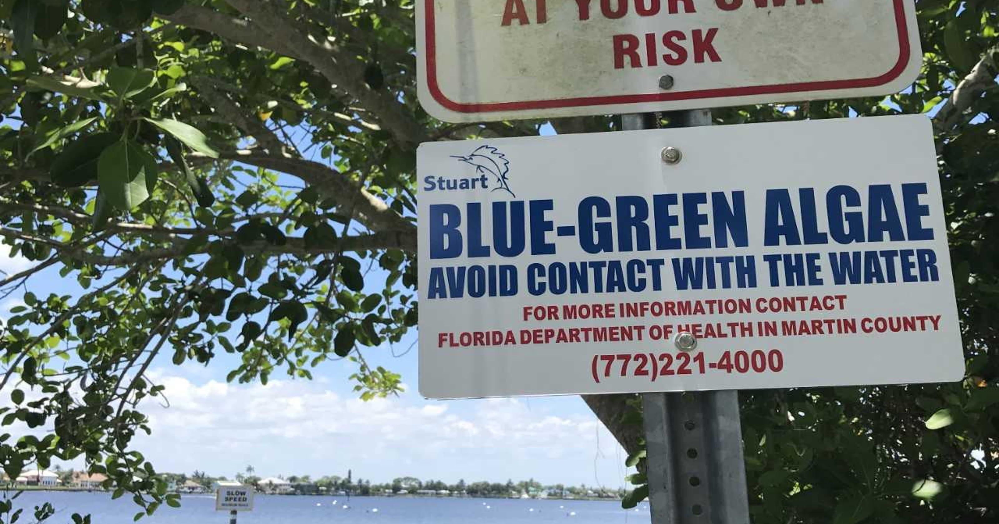Blue Green Algae Sending People To The Hospital