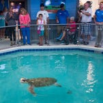 Navarre Beach Sea Turtle Conservation Center will hold memorial for Gigi