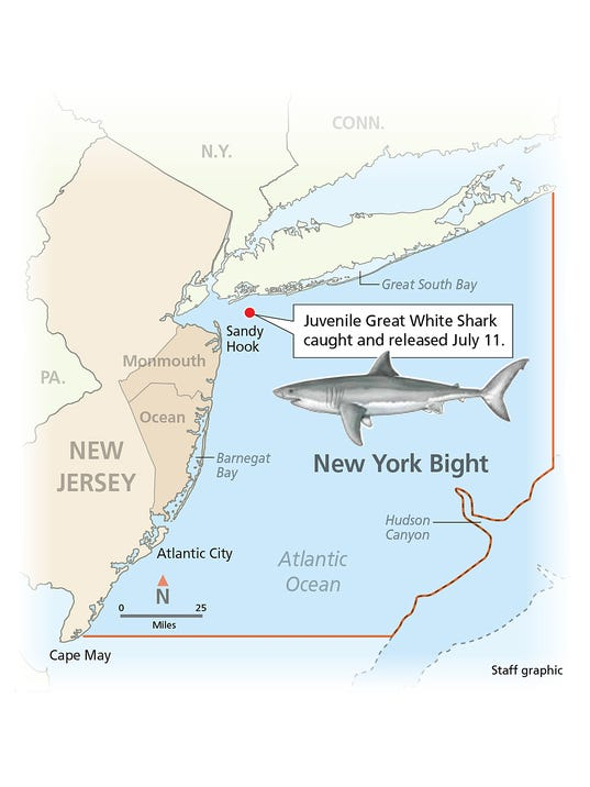 Evidence may point to great white shark nursery off NJ