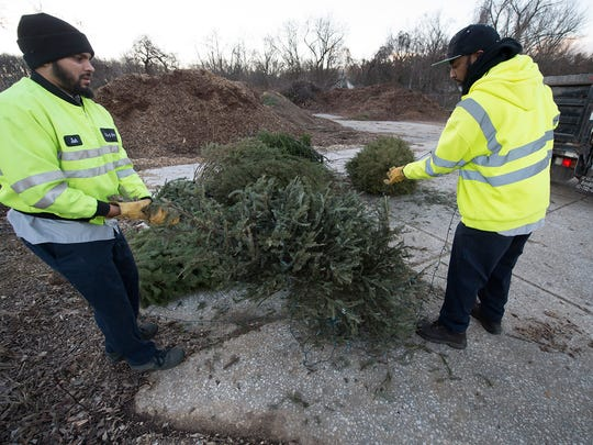 Josh Santiago, left, and George Jennings remove tangled lights from a tree before it can be mulched during Christmas tree removal in York Monday January 4, 2015