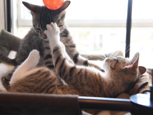 Cat Cafe In Dc Area