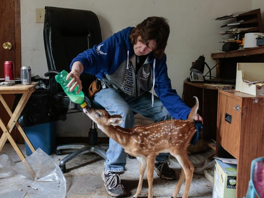 Diane Morin, 57, bottle feeds a fawn named Jimmy at