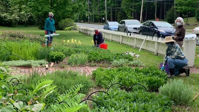 Sporting masks and practicing social distancing, members of the Boxford Village Garden Club work in the gardens at the Holyoke French House.