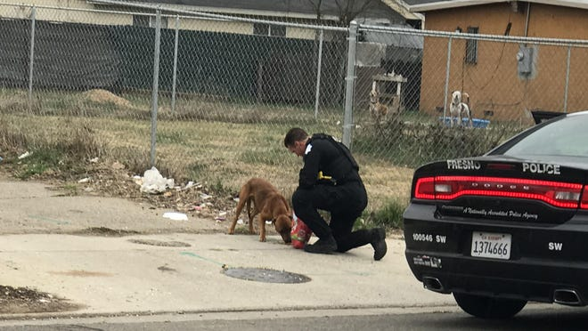 Fresno Police officer William McCarty helped out a stray dog in southwest Fresno, Calif., giving dog food so the animal wouldn't eat a dead squirrel that was on the road or pick through trash. The encounter occurred across from Edison-Bethune Charter Academy just as students were let out of school. (Marty Solis)